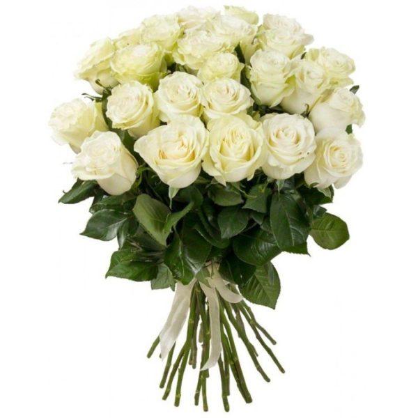 Роза «Mondial» Эквадор